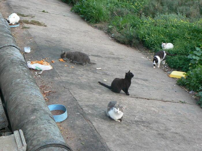 streunende katzen erschießen